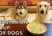 Vegetarian soup for dogs | Healthy and nutritious Broccoli Pumpkin soup